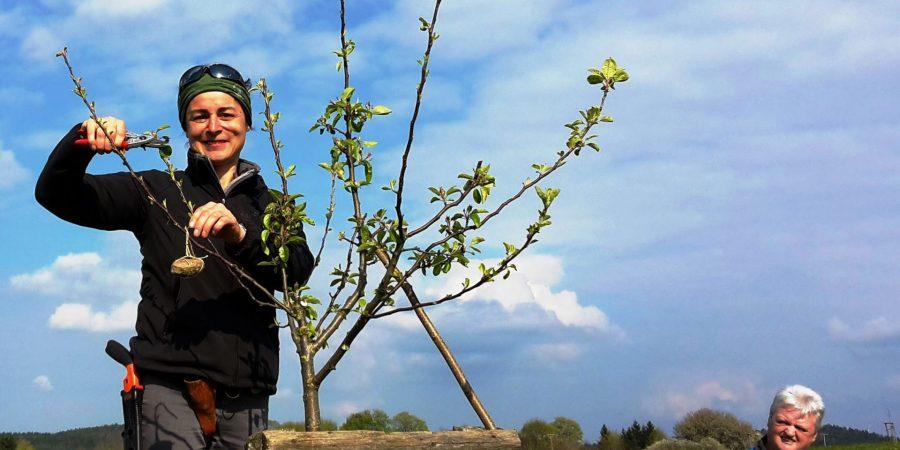 Obstbaumschnittkurs auf der Streuobstwiese